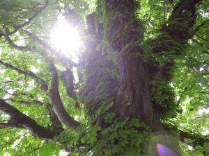 Ausbildung: Energieheiler Baumwebinar
