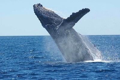 Krafttier Wal